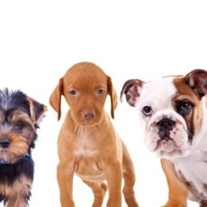 America's Top Ten Favorite Dogs for 2015