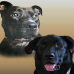 Hazel and Humphrey