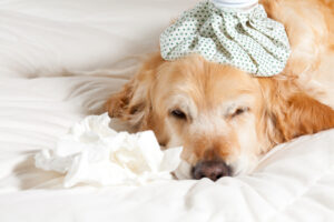 Food Allergy or Food Intolerance in Dogs?