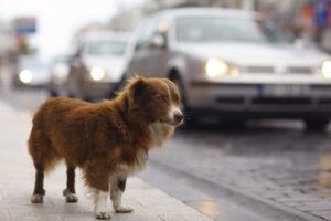 Lost Dog on Street
