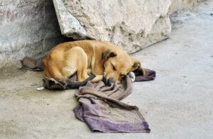 lost dog sleeping on the street