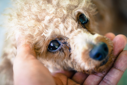 How can you help stop puppy mills?