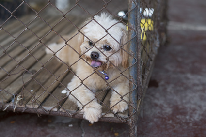 What You Can Do To Help Stop Puppy Mills