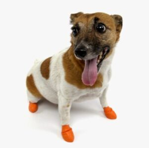 Looking for the Best Paw Protectors?